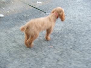 Le chien par Enzo